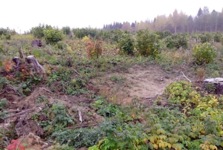 Общий вид места падения самолета МиГ-3 №2460 в Истринском р-не. 2014 г.